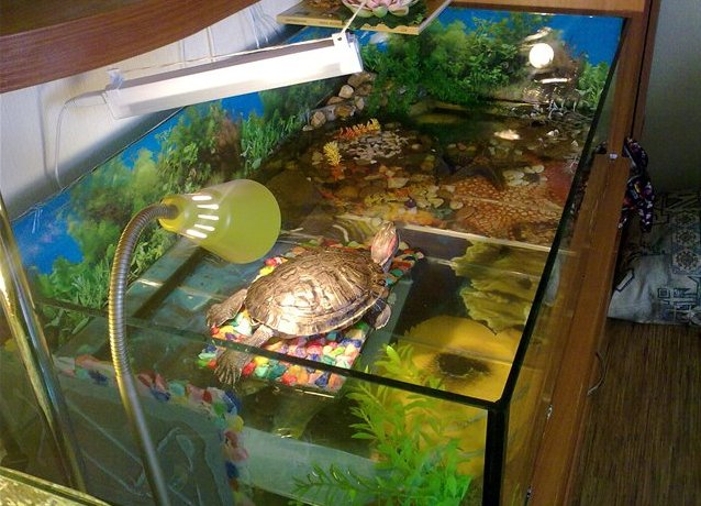Домашние условия водяной черепахи