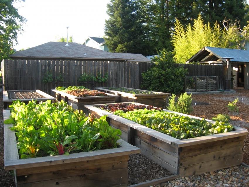 Как я сделала огород красивым своими руками фото