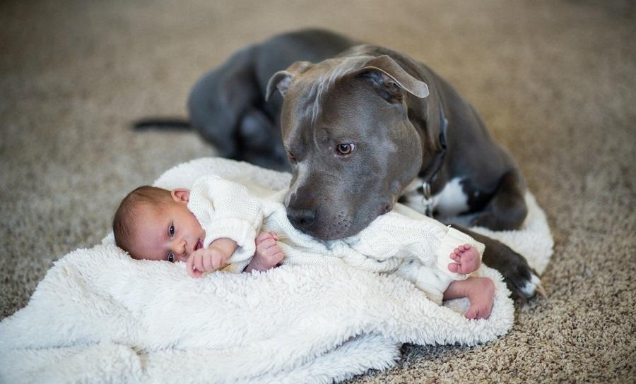 Сложный выбор - собака или безопасность ребенка