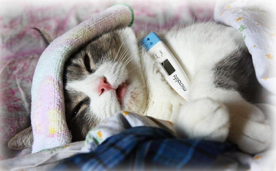 Если кошка заболела. Первые признаки и симптомы