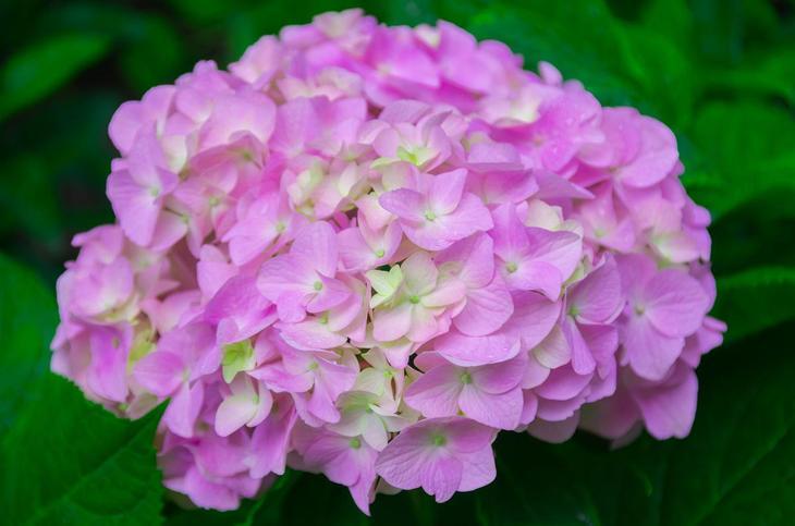 Ядовитые цветы: какую опасность они в себе таят?