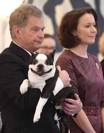 Собака президента Финляндии становится популярней хозяина