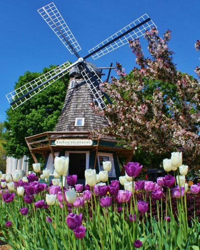 Деревянная мельница — это элемент голландского стиля, поэтому для завершения образа отличным дополнением станут тюльпаны высаженные вокруг нее