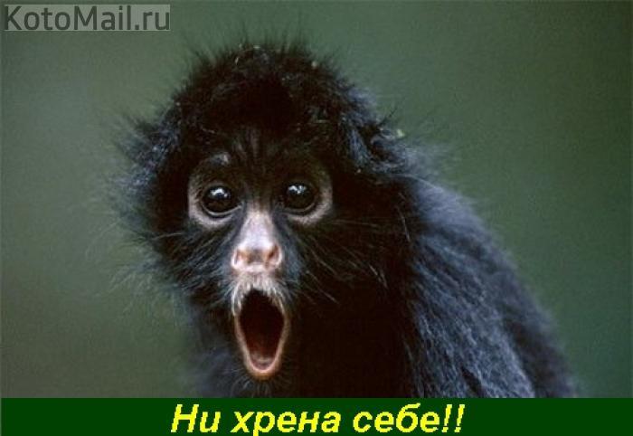 Украина не будет затягивать ратификацию соглашения с ЕС. Это вопрос недель, - глава МИД - Цензор.НЕТ 1101