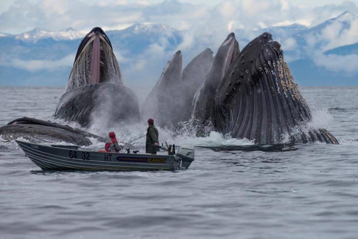 Кит-парад: 5 самых хитовых мест для наблюдения за китами