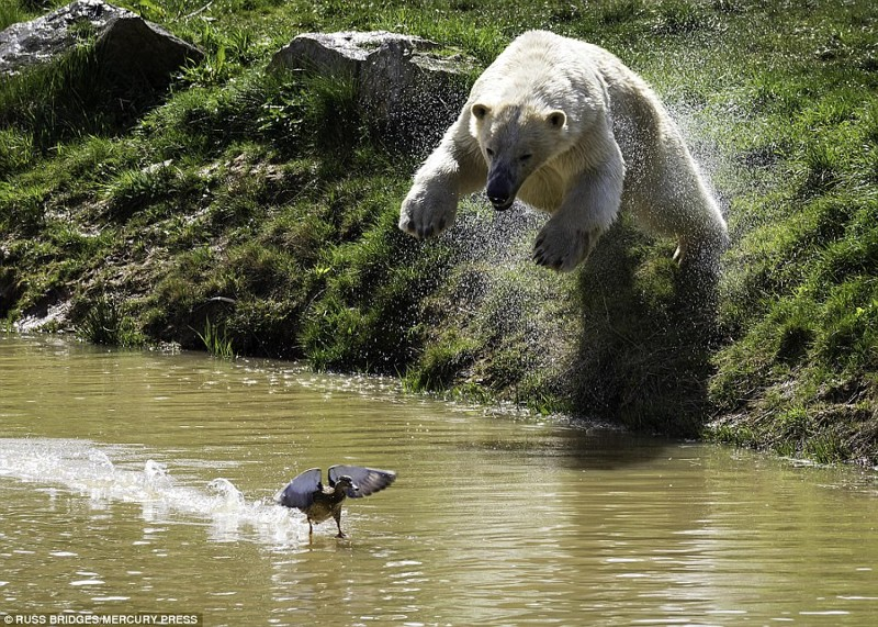 Медвежий фейл