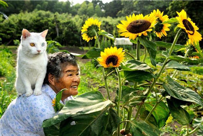 История бабушки и ее кота