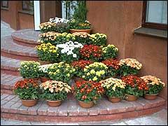 Импортные горшечные растения