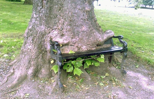 деревья_14