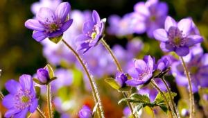 Как танцуют цветы
