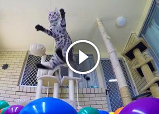 Кот впервые увидел бассейн с шариками