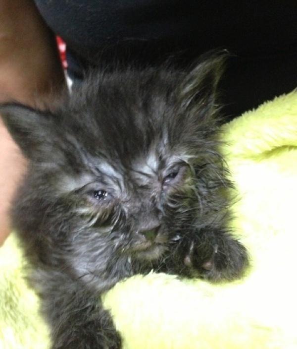 Спасение котёнка