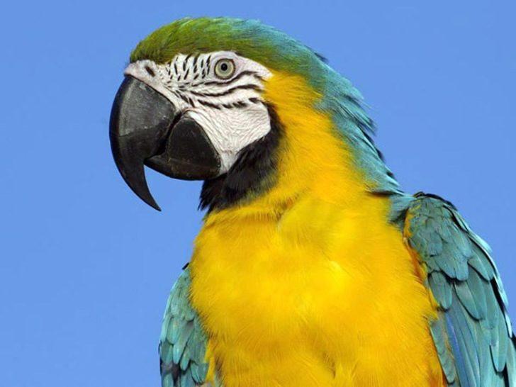 Покупая попугая, мой дядя и представить не мог, что тот его выручать будет