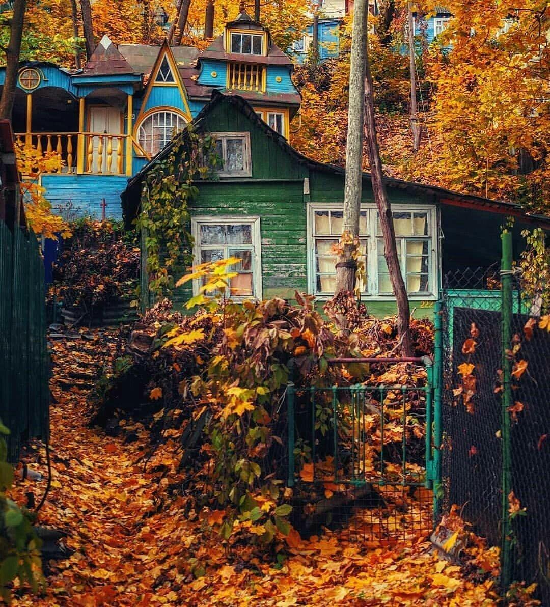 Сами мы золотую осень не застали (Pikabu by Pupsikan4ik)