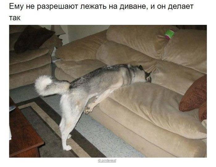 Собаки, которые поняли эту жизнь
