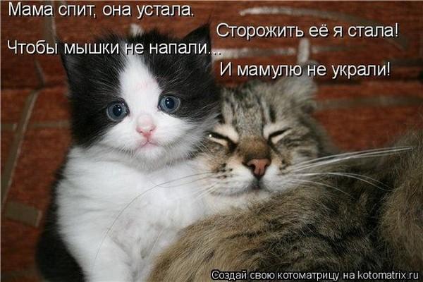 кошка она хочет спать слова полазал наверно РАСПИСАНИЕ