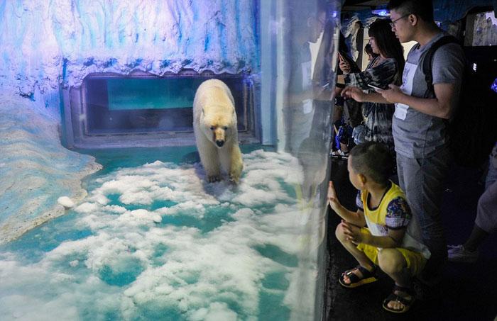 В распоряжении медведя есть только маленький бассейн.