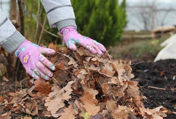 Как поднять плодородие почвы и сэкономить деньги? Готовим листовой перегной!
