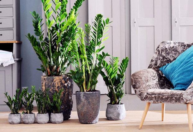 Зеленые экстремалы: 10 «неубиваемых» растений для вашего дома