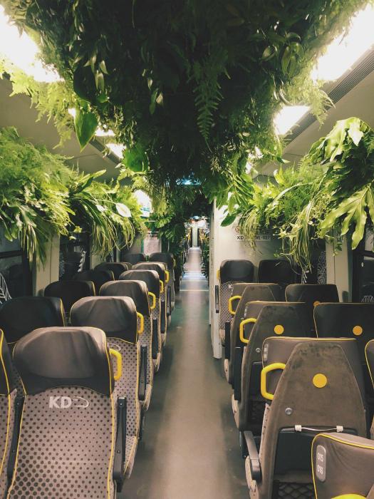 Джунгли в поезде. | Фото: Reddit.