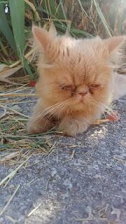 Спасение котейки-потеряшки