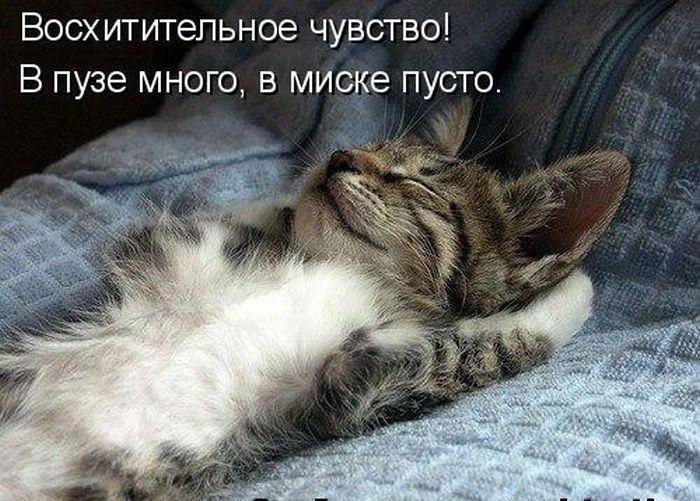 Обязаности кота по дому Обязаности, кот