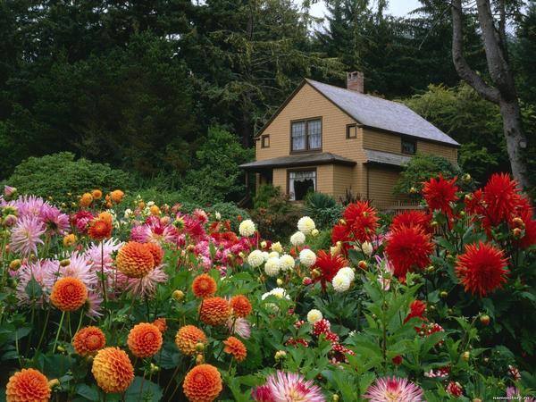 Сад пьянящих ароматов