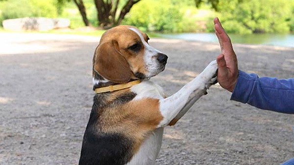 Настоящий собачник - как его…