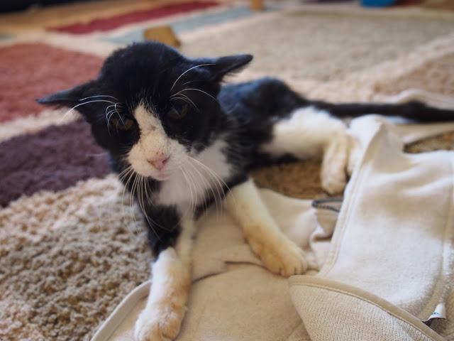 20-летний кот даже не думал, что сможет быть нужным кому-то на старости лет