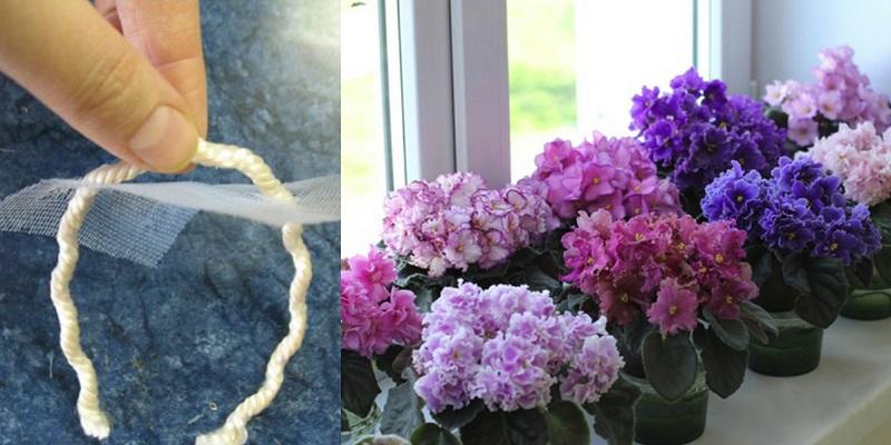 Фиалки цветут круглый год! Благодаря этому методу полива…