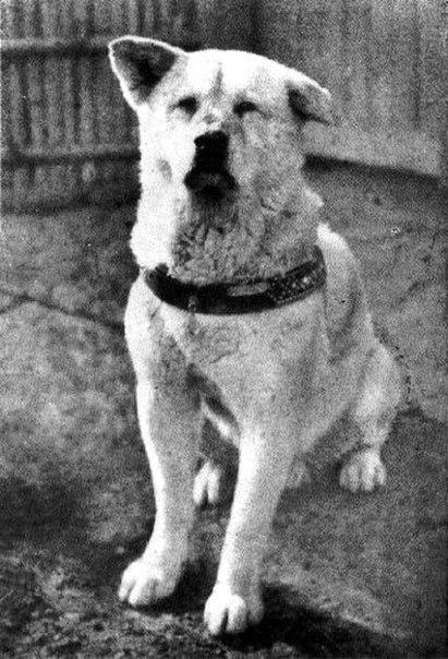 На фото — известный многим пес Хатико
