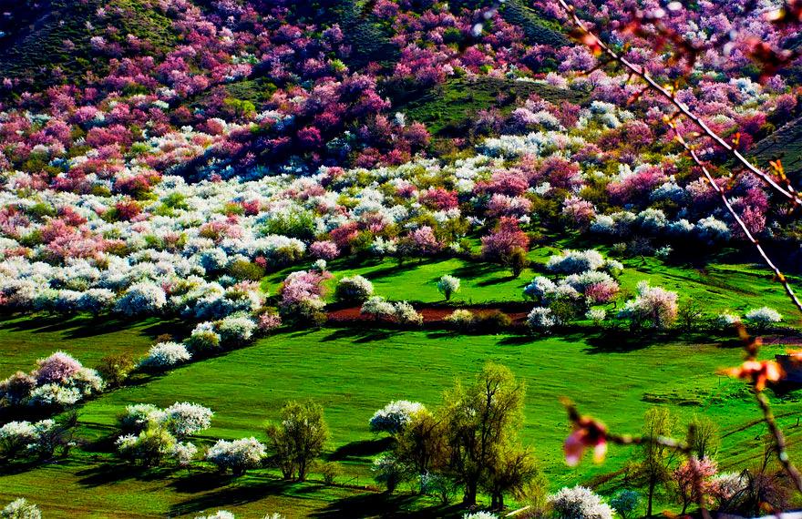 Абрикосовая Долина, Китай