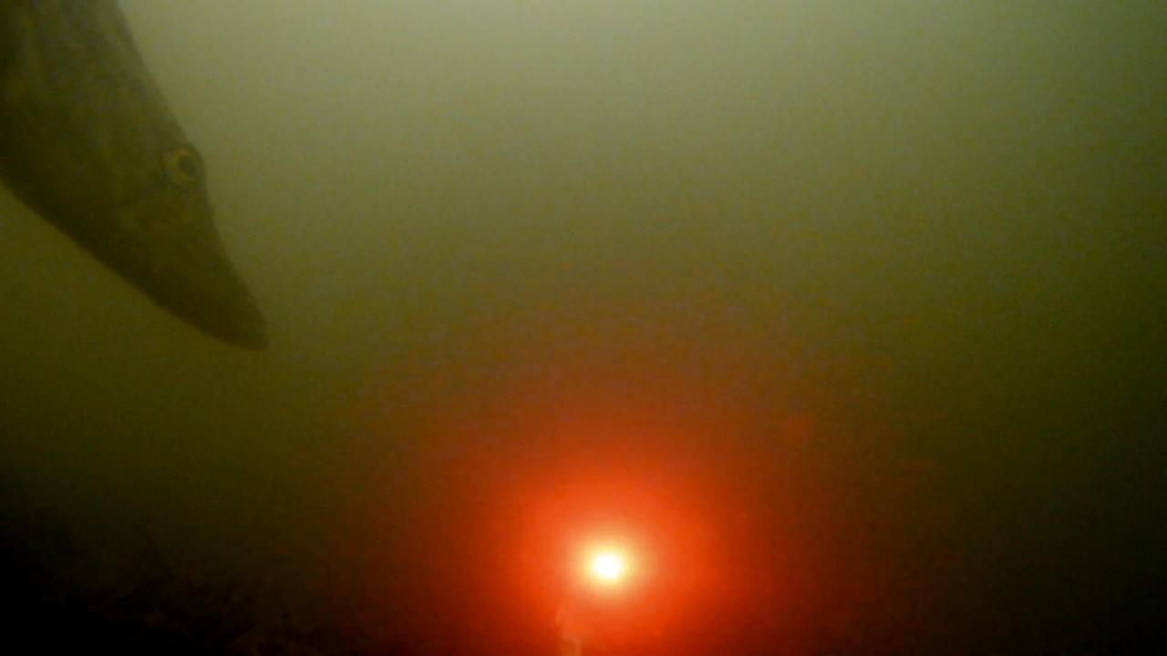 МИГАЛКА В ДЕЙСТВИИ!!! Щука, голавль + Подводная съемка