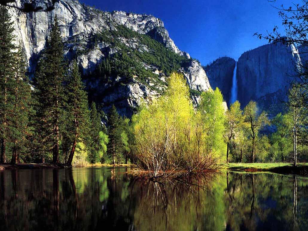 красивая живая природа картинки фото