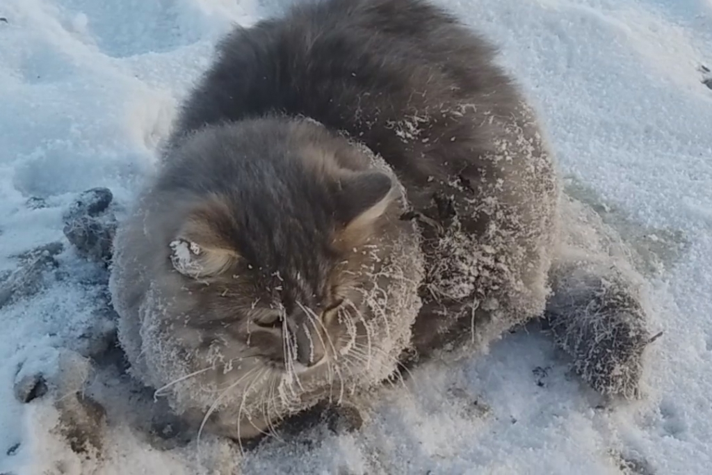 Семейная пара из челябинского Златоуста  спасла кота, вмерзшего при морозе  -35* в лёд.