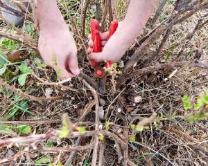 Как подготовить крыжовник к зиме, чтобы летом получить хороший урожай