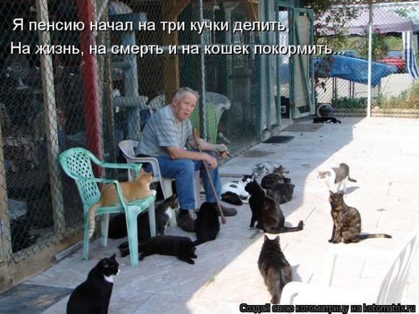 И снова о котах...:)