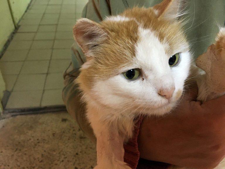 """""""Он не пришёл, а, скорее, приполз…"""" Люди носили полуобморочного кота из клиники в клинику, но никто и смотреть на него не хотел"""