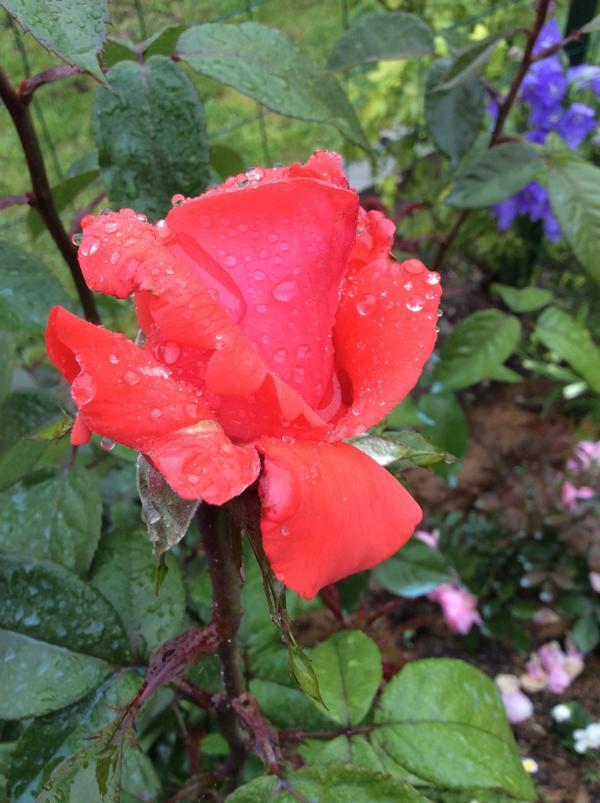 Дождливое майское утро