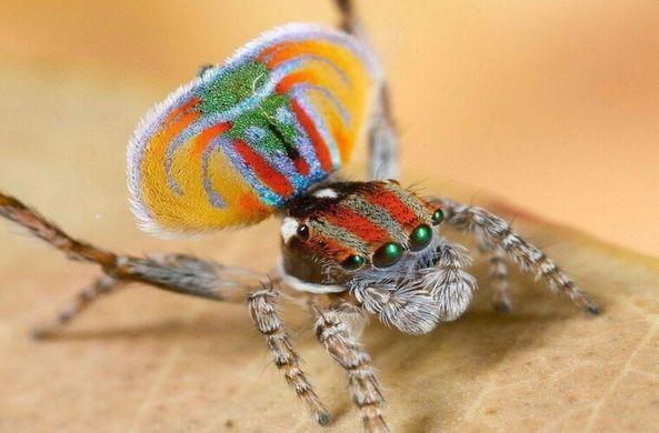 В Австралии обнаружили милых пауков