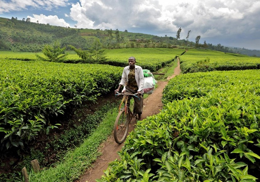 onedayinafrica13 Африка от восхода до заката: поездка занимает один день