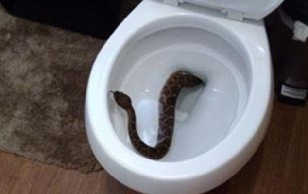 Все началось с одной гремучей змеи в туалете