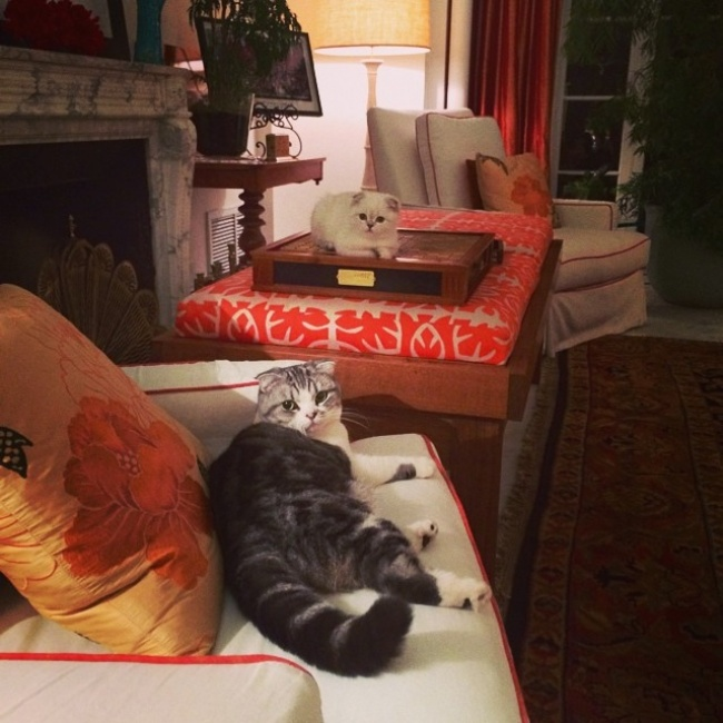 20 вещей, которые понял каждый, у кого два кота