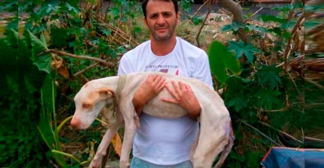 Мужчина подарил вторую жизнь умирающему псу