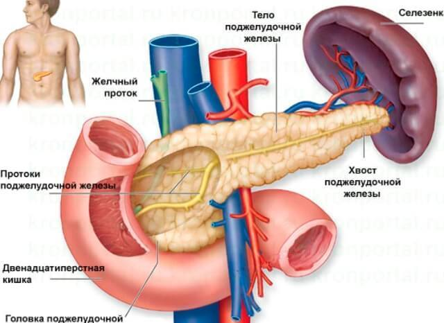 Для чего здоровому человеку, у которого все хорошо, контролировать уровень инсулина в крови?
