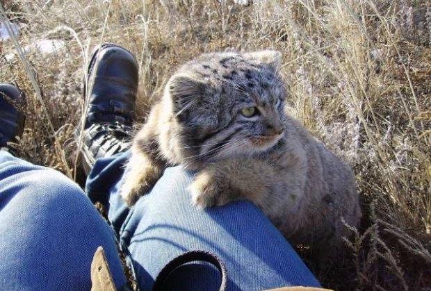 Фермер думал, что подобрал котят, но когда они подросли, его ждал сюрприз