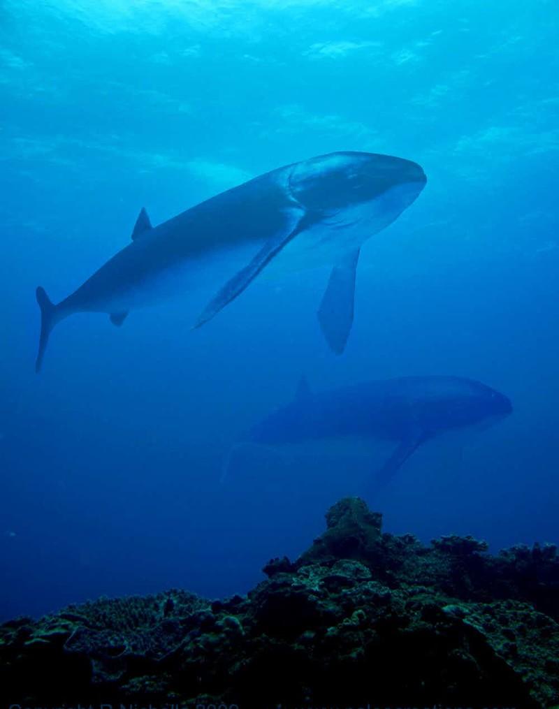 8. Лидсихтис гигант, животные, планета
