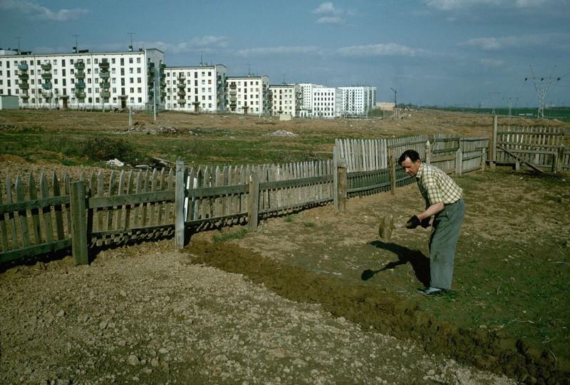 Огород на окраине Москвы. Зюзино, 1964 год СССР, быт, воспоминания, ностальгия, фото