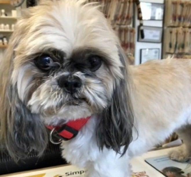«С возвращением, Шони!»: бродячая собака оказалась совсем не бездомной, как поначалу решили люди…