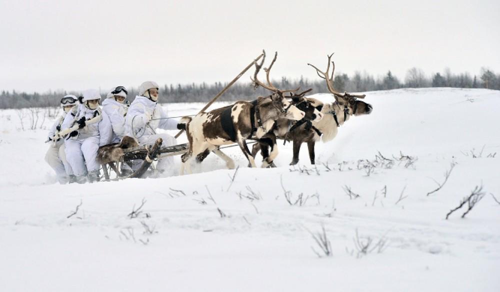 Почему российские солдаты разъезжают по Арктике на санях, запряженных северными оленями